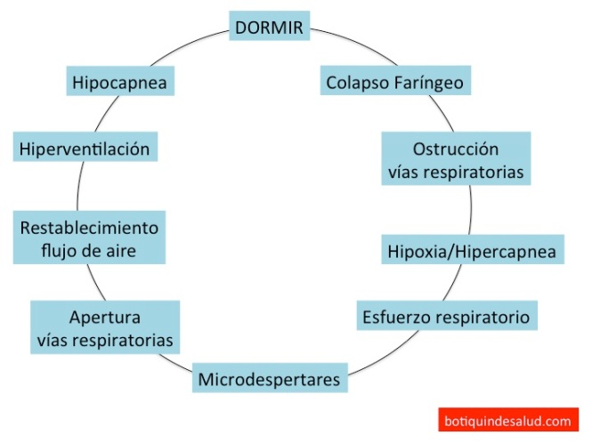 Ciclo apnea