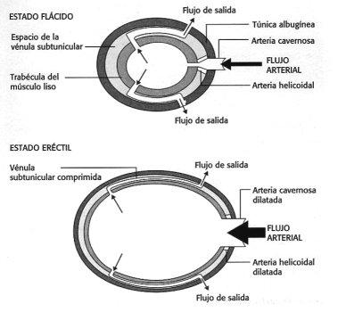 pastillas para la disfunción eréctil vasodilatador para la disfunción eréctil