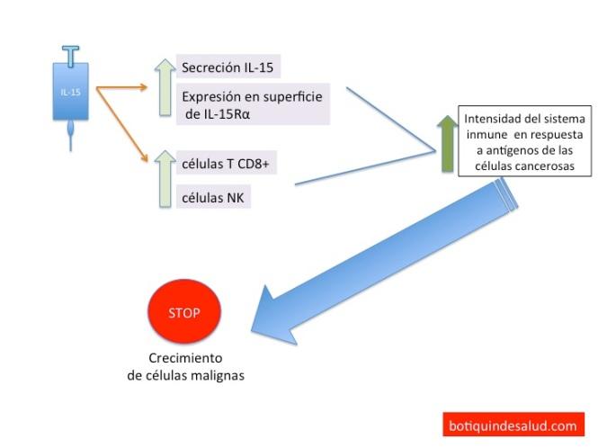 vacuna cancer IL-15