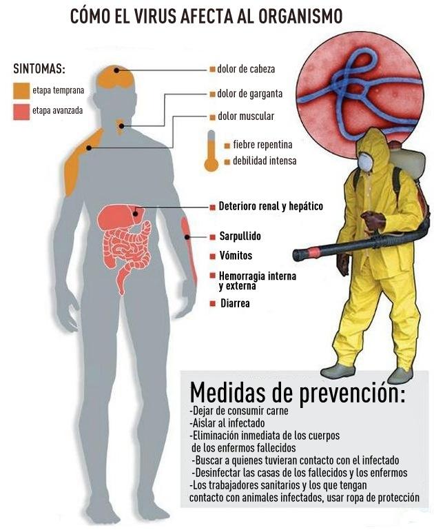 afectacion_cuerpo_virus_ebola