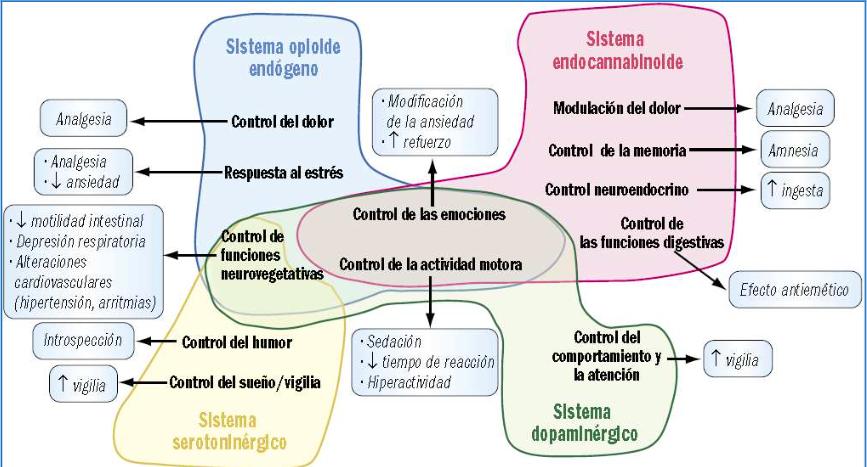 La definición y las fases del alcoholismo